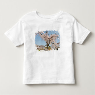 Japan, Kyoto. Weeping cherry tree under blue sky Toddler T-shirt