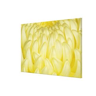 Japan, Mie, Ise Shrine, Chrysanthemum Gallery Wrap Canvas