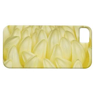 Japan, Mie, Ise Shrine, Chrysanthemum iPhone 5 Covers