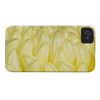 Japan, Mie, Ise Shrine, Chrysanthemum Case-Mate iPhone 4 Cases