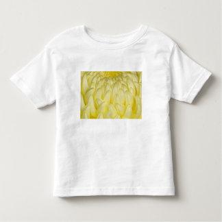 Japan, Mie, Ise Shrine, Chrysanthemum Toddler T-shirt