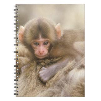 Japan, Nagano, Jigokudani, Snow Monkey Baby, Notebooks
