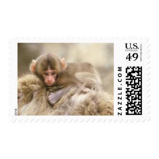 Japan, Nagano, Jigokudani, Snow Monkey Baby, Postage