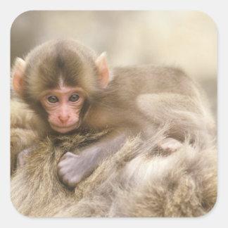 Japan, Nagano, Jigokudani, Snow Monkey Baby, Square Sticker