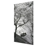 Japan, Tokyo. Cherry blossoms in the Imperial Canvas Print