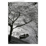 Japan, Tokyo. Cherry blossoms in the Imperial Card