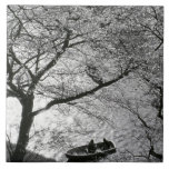 Japan, Tokyo. Cherry blossoms in the Imperial Tile