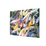 Japan, Tokyo, close-up swimming fish Gallery Wrap Canvas
