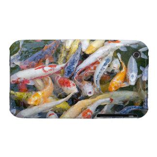 Japan, Tokyo, close-up swimming fish iPhone 3 Cover