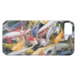 Japan, Tokyo, close-up swimming fish iPhone 5 Case