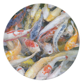 Japan, Tokyo, close-up swimming fish Party Plate
