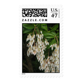 Japanese Andromeda, Spring, photograph Postage Stamp
