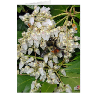Japanese Andromeda  with Busy Spring Bee Card