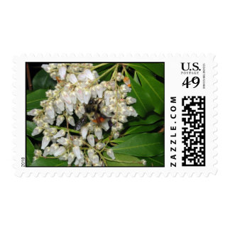 Japanese Andromeda with busy Spring Bee Postage Stamp