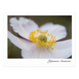 Japanese Anemone Herbstanemone Post Cards