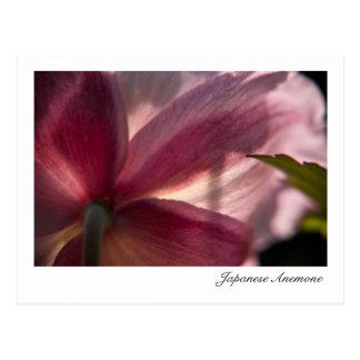 Japanese Anemone Herbstanemone Post Card