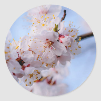 Japanese Apricot Blossom Classic Round Sticker