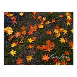 Japanese Autumn Maple Leaves Post Card