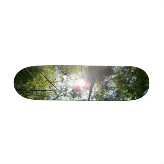 japanese bamboo forest and sun skate deck