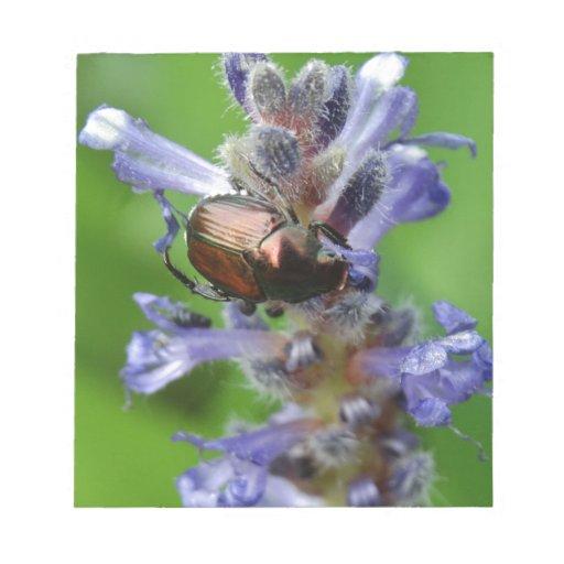 Japanese Beetle on Purple Arrowhead flower Notepads