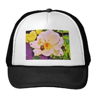 Japanese Beetle on White  Rose Hats
