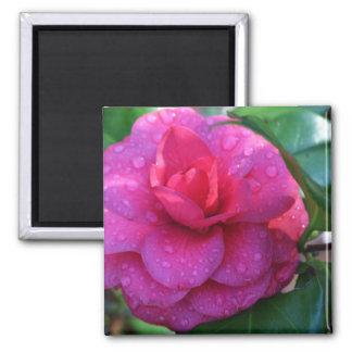 Japanese Camellia with Rain Drops-011 Fridge Magnet