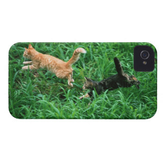 Japanese Cat 3 iPhone 4 Case-Mate Case
