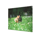 Japanese Cat 4 Stretched Canvas Prints