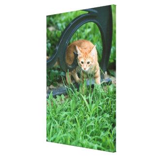Japanese Cat 5 Canvas Print