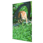 Japanese Cat 5 Stretched Canvas Prints