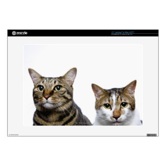 "Japanese cat and Manx cat on white background 15"" Laptop Decal"