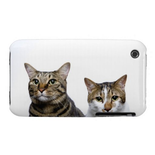 Japanese cat and Manx cat on white background iPhone 3 Cover