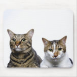 Japanese cat and Manx cat on white background Mouse Pad