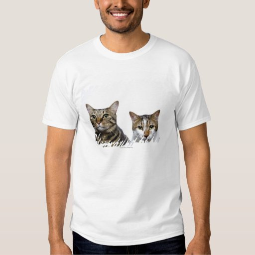 Japanese cat and Manx cat on white background T-Shirt