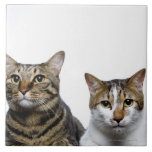 Japanese cat and Manx cat on white background Tile