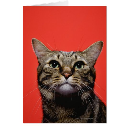 Japanese cat looking up card