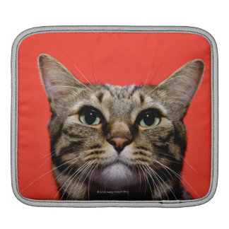 Japanese cat looking up iPad sleeves