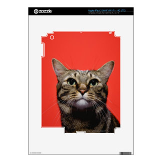 Japanese cat looking up skin for iPad 3