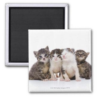 Japanese cat magnet