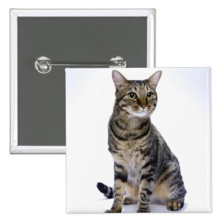Japanese cat on white background pinback button