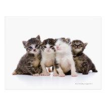 Japanese cat postcard