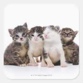 Japanese cat square sticker