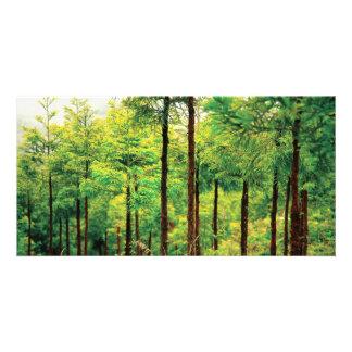 Japanese Cedar woods Card