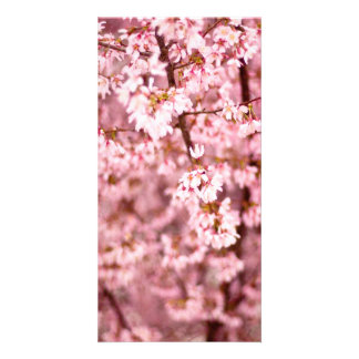 Japanese Cherry Blooms Card