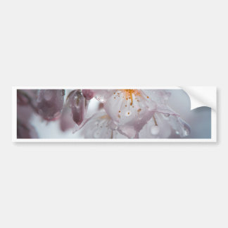 Japanese Cherry Blossom after the rains Bumper Sticker
