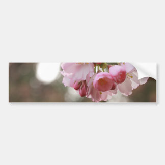 japanese cherry blossom in the light car bumper sticker