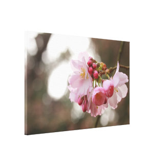 japanese cherry blossom in the light gallery wrapped canvas