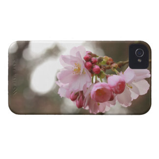 japanese cherry blossom in the light iPhone 4 cases