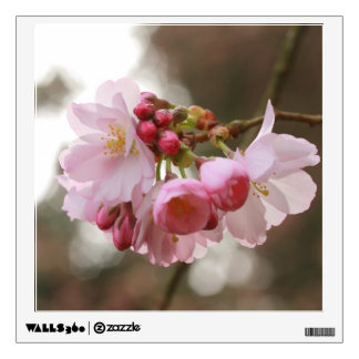 japanese cherry blossom in the light room graphic