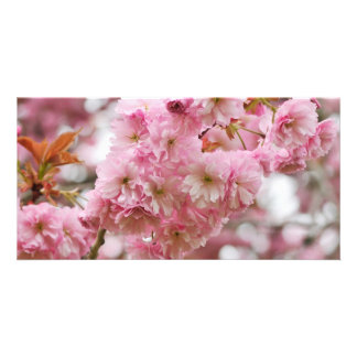 Japanese Cherry blossom Photo Card